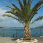 Palme am Ufer