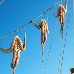 Tintenfische hängen zum Trocknen auf einer Leine