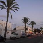 Straße mit Palmen